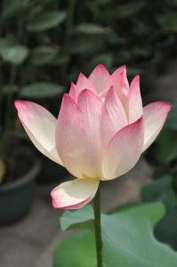 loto yoga